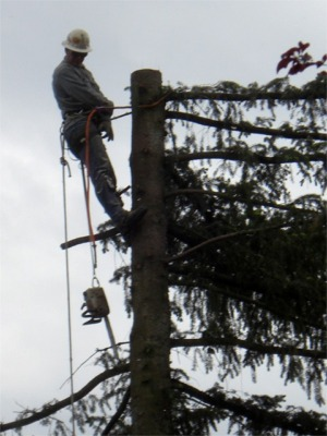 Tacoma Tree Topping Service