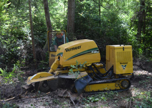 Tacoma stump grinding