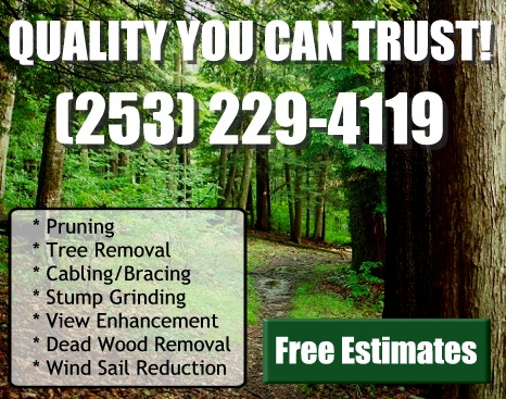 Tacoma Tree Service & Tree Removal, Cabling & Bracing of trees, Stump Grinding, View Enhancement through the removal of trees, Dead Wood Removal
